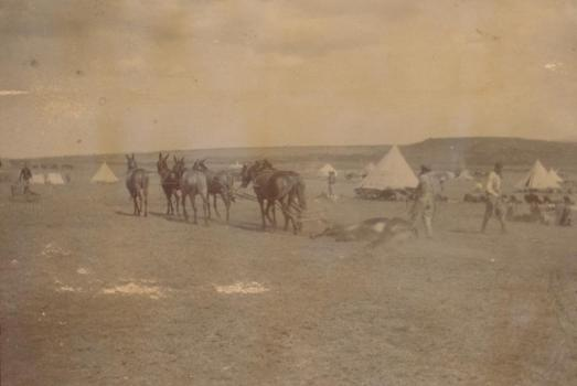 Boer War Encampment from Ralph Durand's Africa Cuttings Book, Priaulx LIbrary Collection