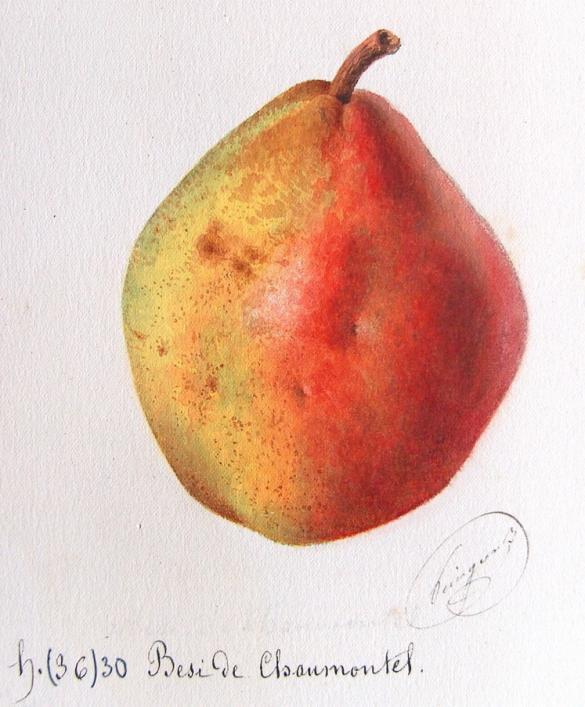 Par Alphonse Mas, Le verger, aquarelles, 1865. — http://pomologie.com/poire/poire1/fpoires/besidechaumontel/besidechaumontel.html, Domaine public, https://commons.wikimedia.org/w/index.php?curid=45607746